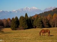 Autunno in Val Belluna
