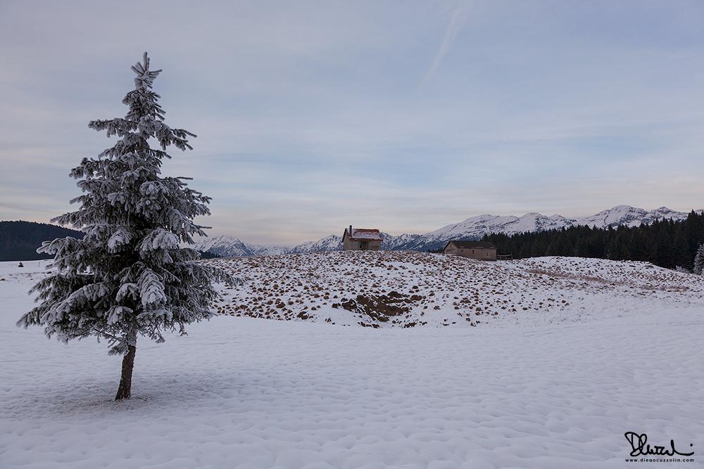 Cansiglio, grigia giornata invernale
