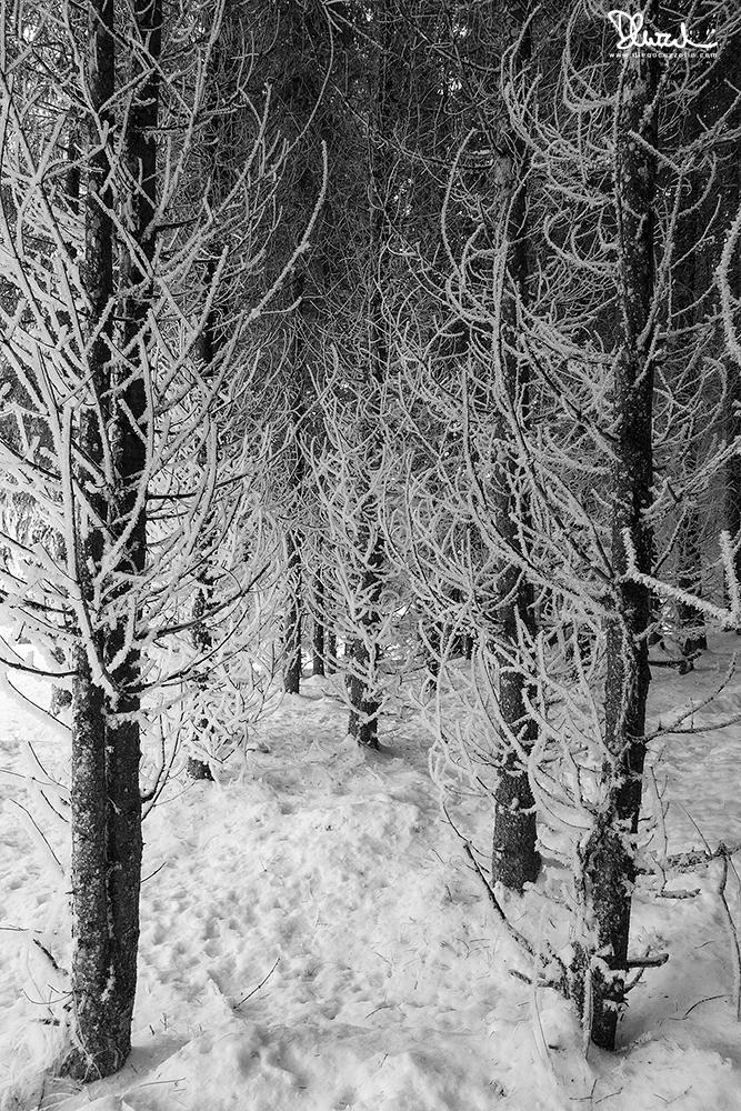 Nel bosco, d'inverno