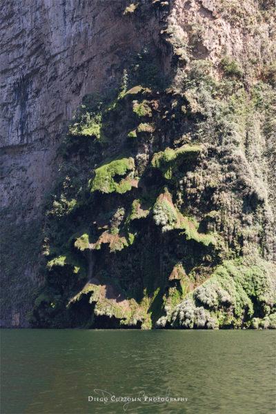 La caratteristica forma ad albero della cascata