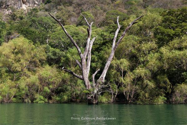 La foresta tropicale del Canyon del Sumidero